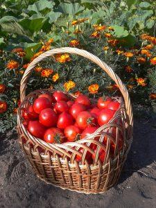 harvest-523656_640