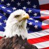 eagle-219679_640